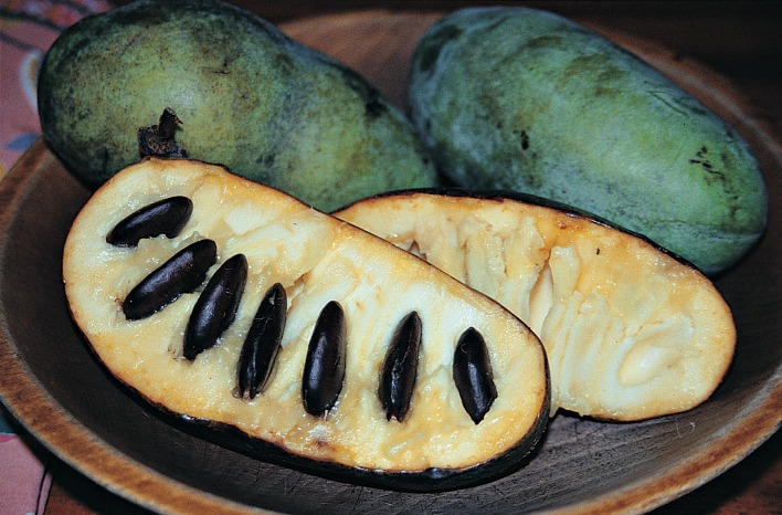 pawpaw fruit sliced open