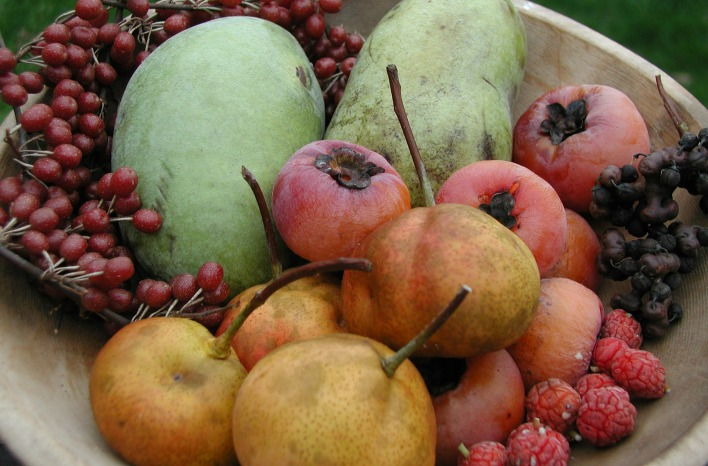 a bowl of autumns uncommon fruits