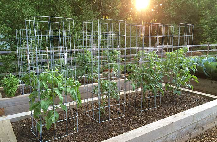 Joe Lamp'l Ultimate Tomato Cage