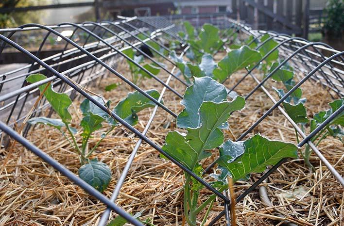 seedlings at the GardenFarm