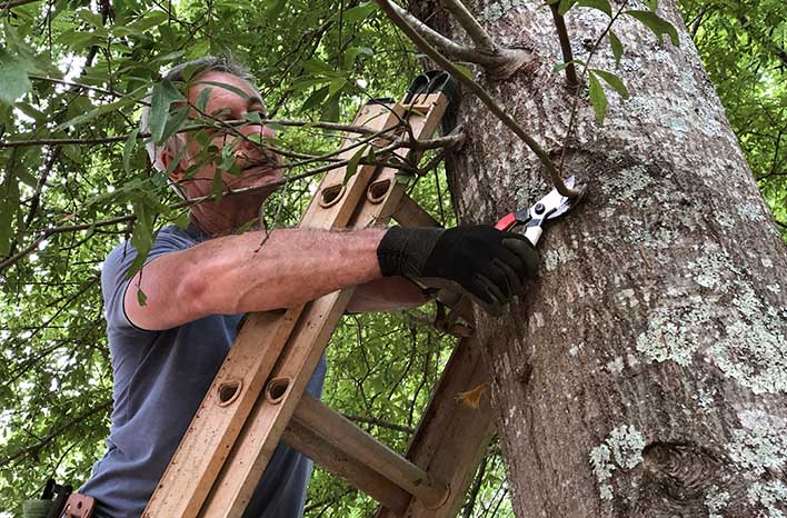 Joe Lamp'l tree pruning