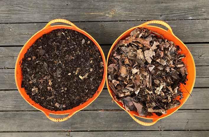 leaves as mulch