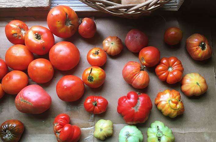 tomato care checklist