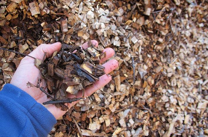arborist wood chips