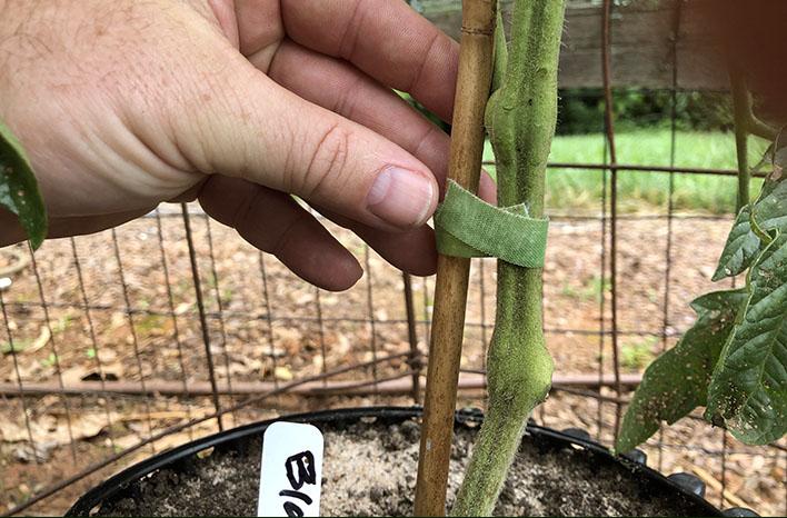 garden Velcro tape