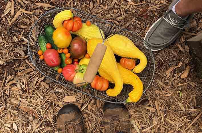 GardenFarm produce