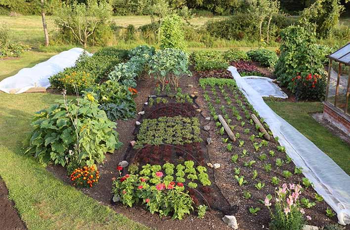no-dig gardening Homeacres