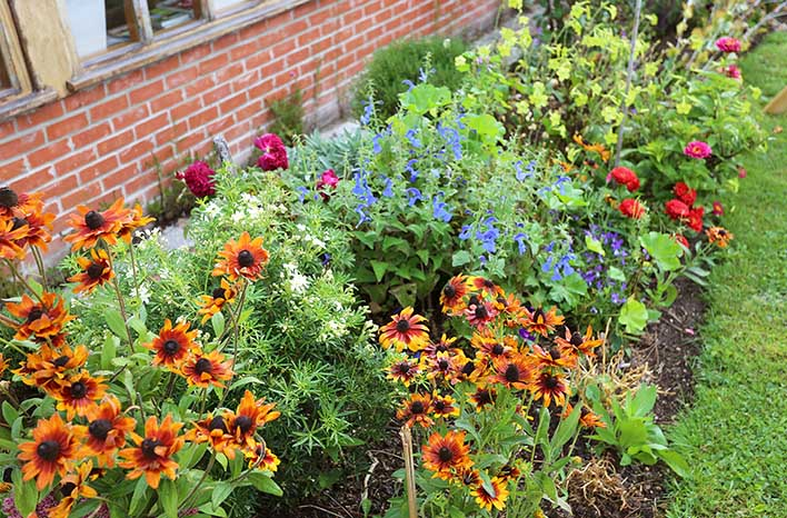 Homeacres flower border