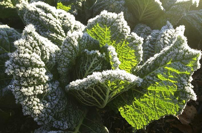 fall garden frost