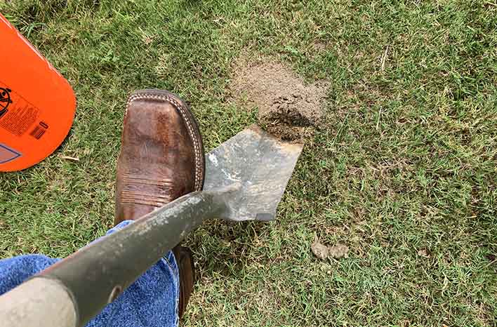 fire ant colony - physical removal