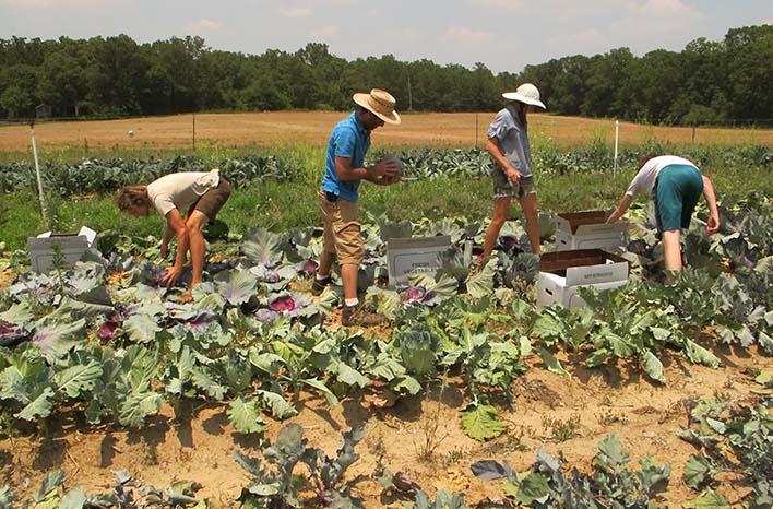 Takeaways for gardeners
