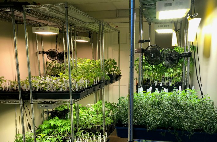 lights and fans in the indoor seed starting room