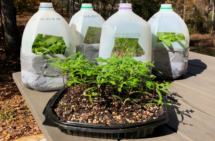 options for winter sowing containers