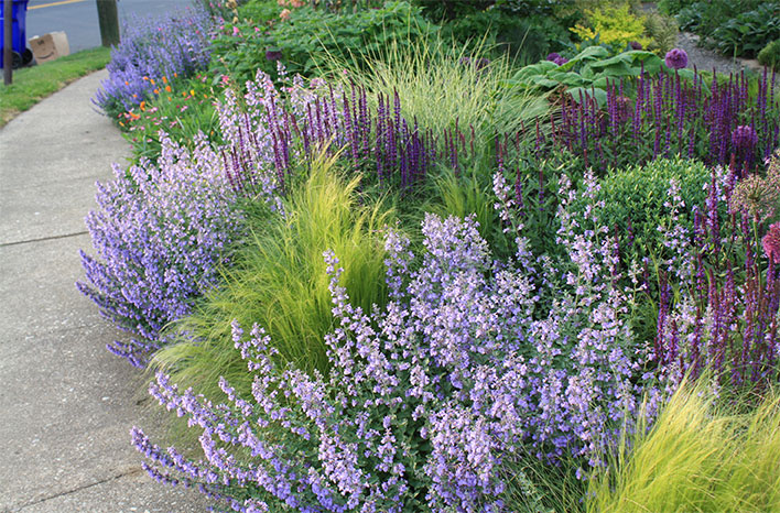 Border Plants in Thomas Rainer's Garden