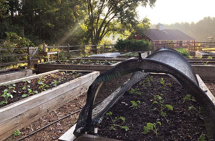 Shade cloth at the GardenFarm