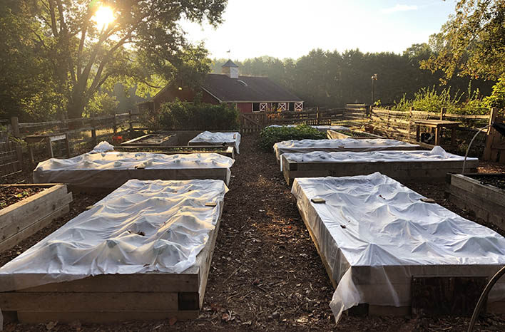 top takeaways floating row cover at the GardenFarm