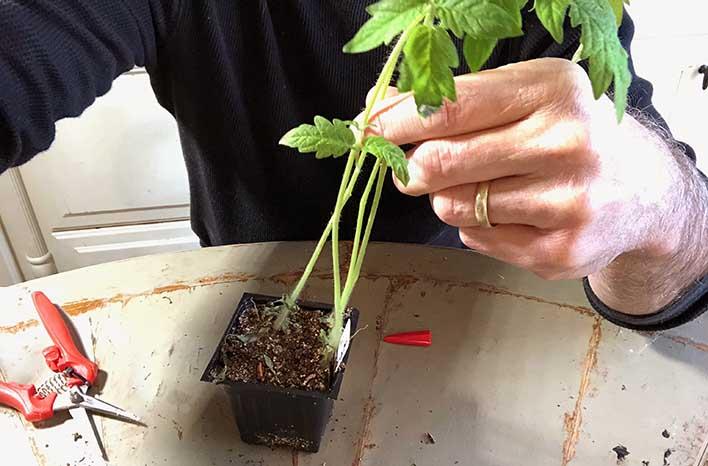 top takeaways Leggy seedlings