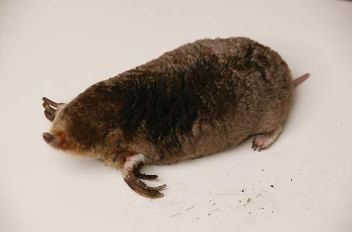 top takeaways mole protection