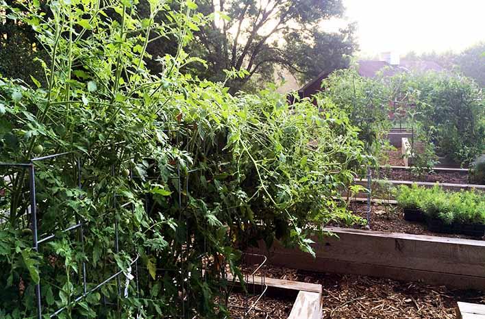 top takeaways tomatoes at the GardenFarm