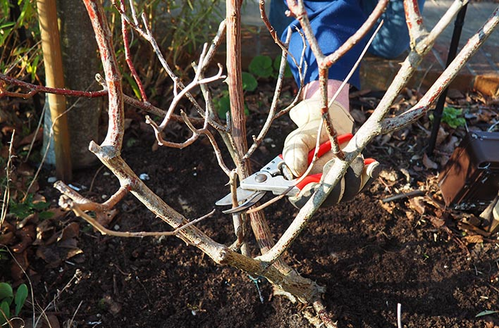 pruning for air and light
