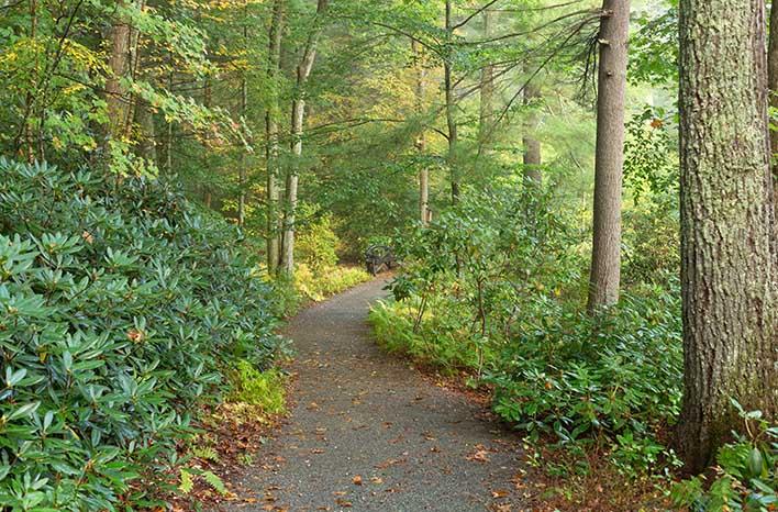 Native Plant Trust gardens