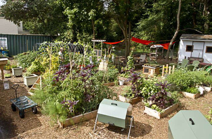 Farmer D garden