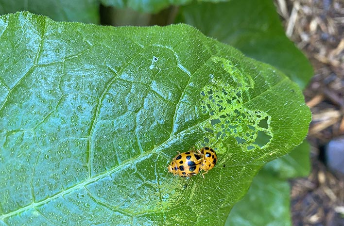 disease management - insect damage