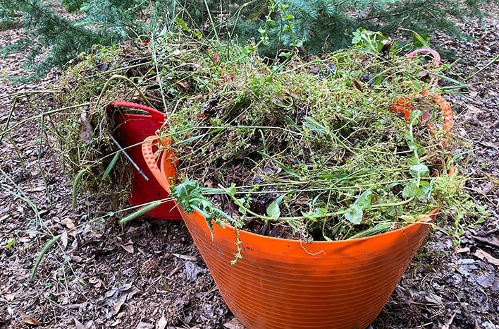 Tub Trug full of weeds