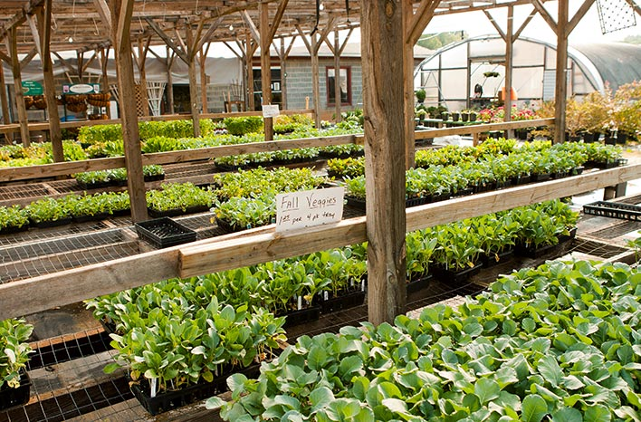 Seedlings in a plant nursery