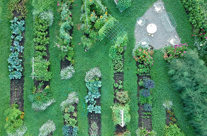 Aerial shot of Meg Cowden's lush Minnesota garden demonstrates succession planting.