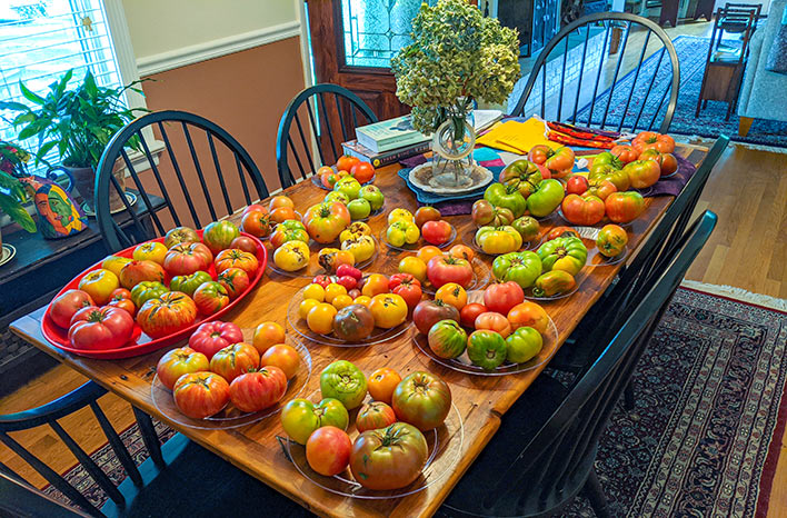 Table covered in tomatoes