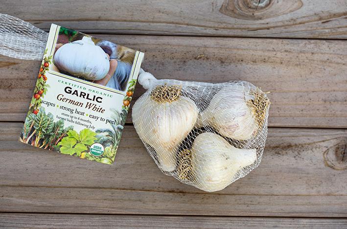 Garlic bulbs in mesh bag with tag