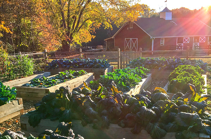 GardenFarm in Fall