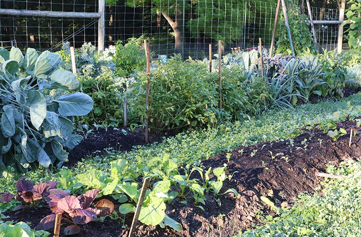 Garden rows with vegetables