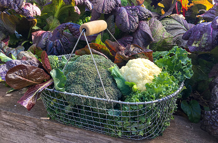 Basket of cool-season vegetables