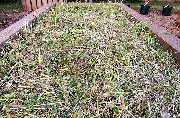 Dead cover crop plant material