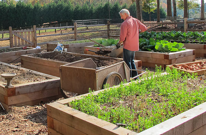 Joe Lamp'l with cover crops on his raised beds