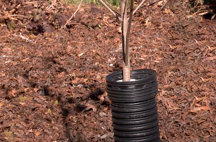 Corrugated tubing to protect tree trunk