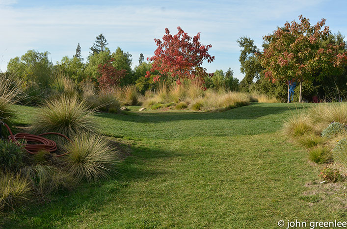 turf and ornamental grasses