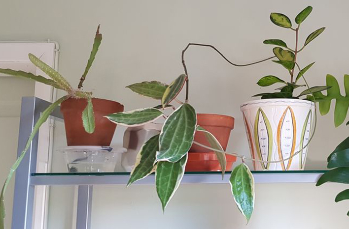 epiphytic houseplants on a shelf
