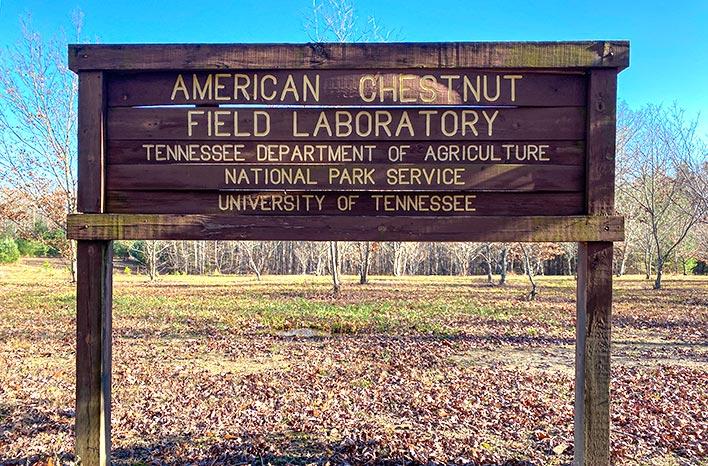 American Chestnut Feld Laboratory