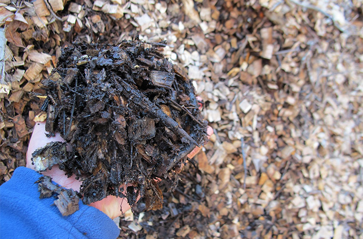 Handful of wood mulch