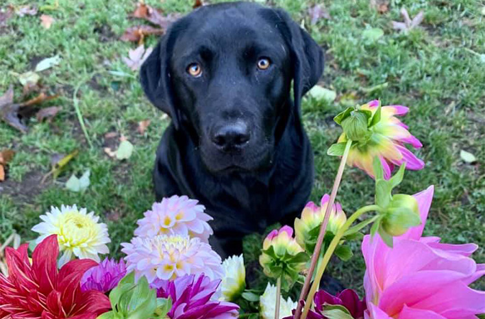 Dog with colorful flowers