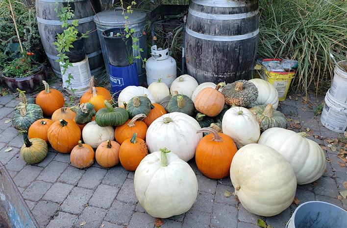 An assortment of pumpkins
