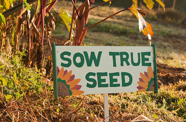 Sow True Seed Sign