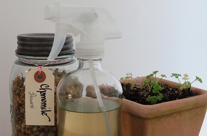 Making chamomile tea for seedlings