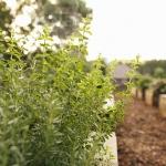 How Do I Grow Herbs?