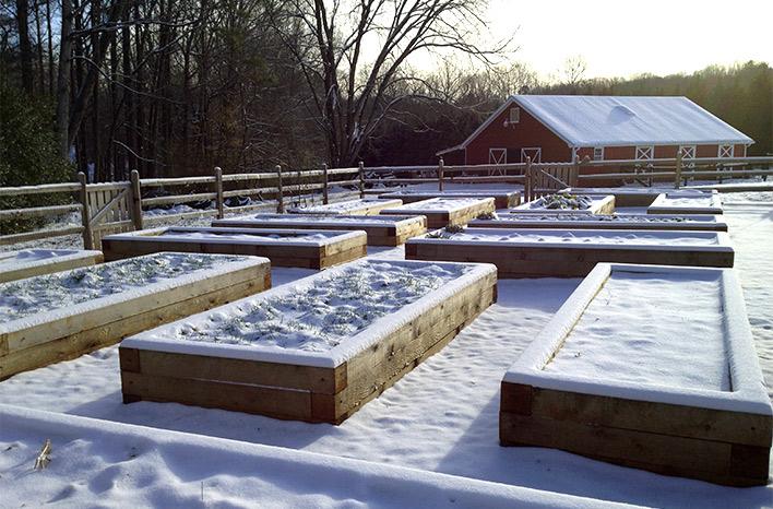 A snow-covered garden.