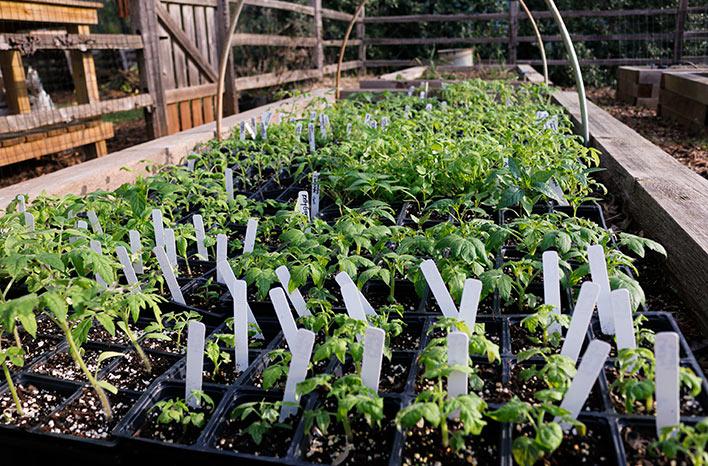 seedlings hardening off outside