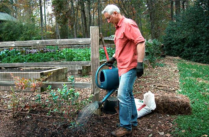 watering blueberries